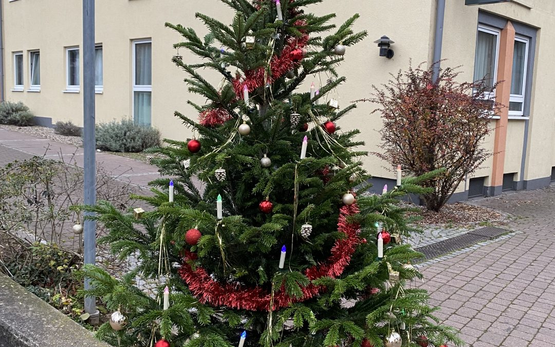 Weihnachtsbaum-Aktion des Hockenheimer Marketingvereins